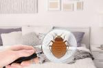 Comment se débarrasser efficacement des punaises de lit?